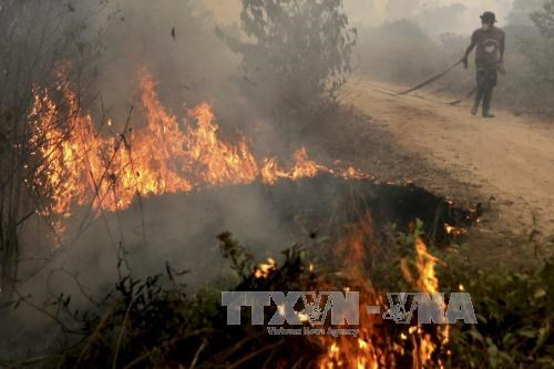 Indonesia needs three years to end forest fires hinh anh 1