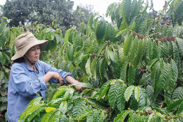 Coffee sector aims to increase added value hinh anh 1