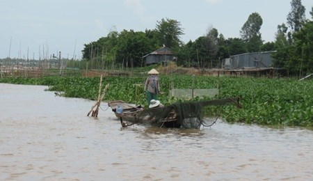 Mekong Delta faces water shortage hinh anh 1
