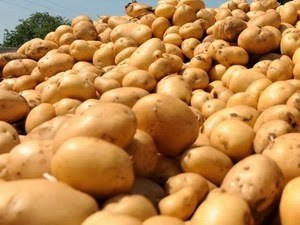 New Zealand to ship potatoes to Vietnam hinh anh 1