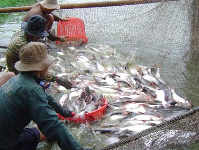 Vietnam holds potential for seafood hinh anh 1