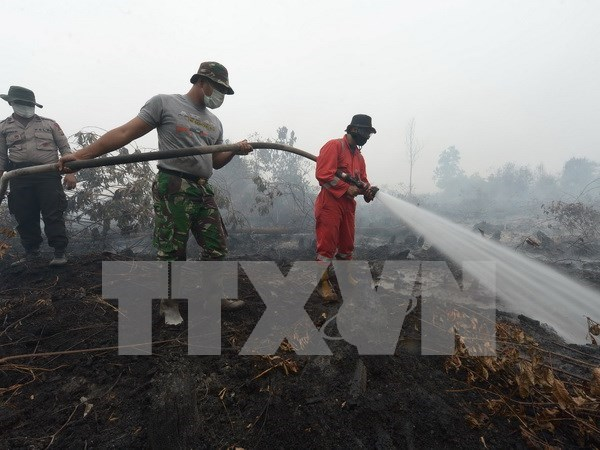 Indonesia likely to develop canals for preventing fires hinh anh 1