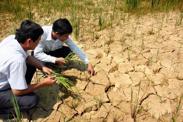 El Nino weather patterns to be harsh through early 2016 hinh anh 1