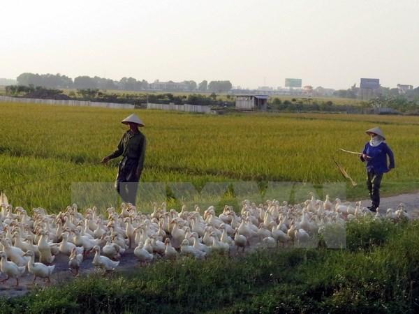 A/H5N6 avian flu virus found in Nam Dinh hinh anh 1