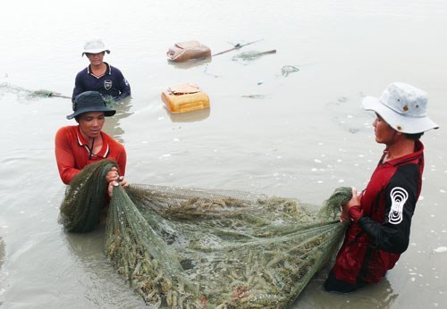 Ca Mau's seafood exports fall hinh anh 1
