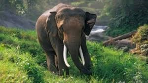 Thai amazing elephant shows to kick off next month hinh anh 1