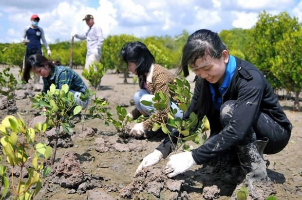 Long An strives for 11.19 percent forest coverage hinh anh 1