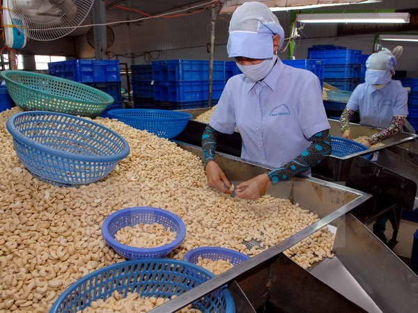 Vietnam's cashew exports surge in January hinh anh 1