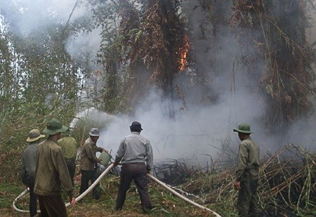 U Minh Ha forest faces fire threat as drought continues hinh anh 1