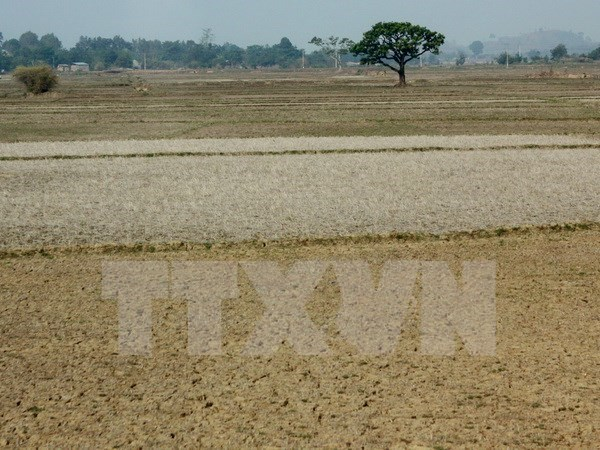 Maximum efforts to save Central Highlands from drought hinh anh 1
