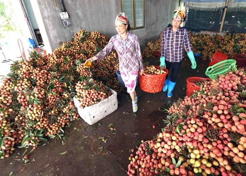 Irradiation facilities benefit fruit exporters hinh anh 1