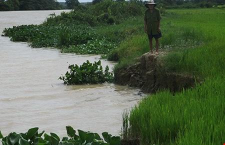 Long An: About 840 households vulnerable to riverside erosion hinh anh 1
