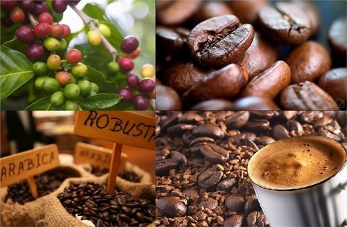 Companies vow pure coffee hinh anh 1