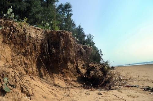 Khanh Hoa tackles coastal erosion hinh anh 1