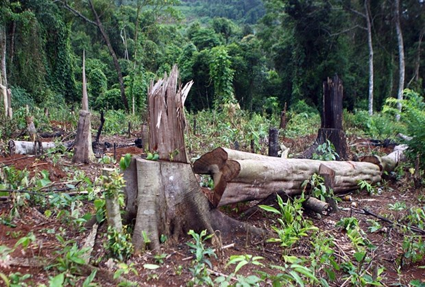 Ministry aims to restore, develop protect forests hinh anh 1