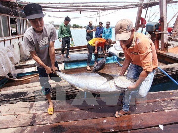 Fishery catching reaches 2.3 million tonnes in nine months hinh anh 1