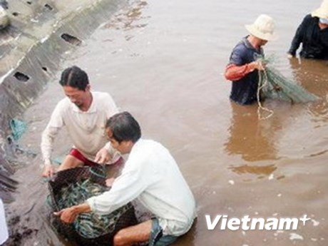 Kien Giang works to promote sustainable poverty reduction hinh anh 1