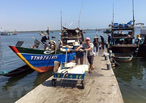 Fisheries sector reaches out to ocean to develop marine economy hinh anh 2