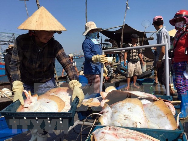Fisheries sector reaches out to ocean to develop marine economy hinh anh 1