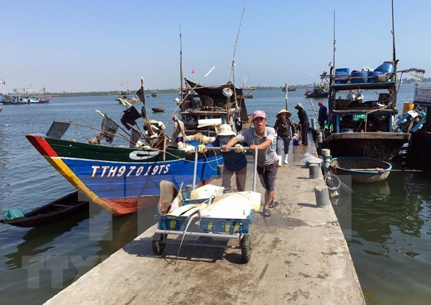 Fisheries sector reaches out to ocean to develop marine economy hinh anh 3