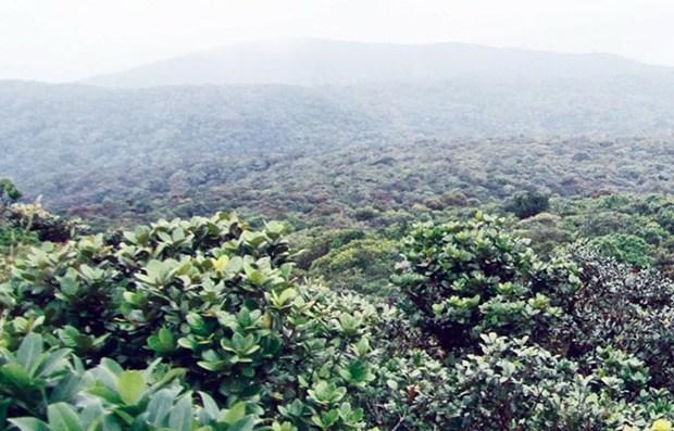 Discovering Kon Ka Kinh National Park, Gia Lai's 'rooftop' hinh anh 1
