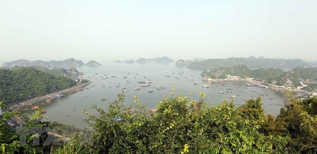 Cat Ba World Biosphere Reserve becomes attractive destination hinh anh 1