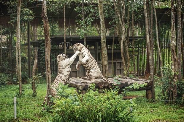 Phu Quoc island: hi-end eco-resort destination hinh anh 3