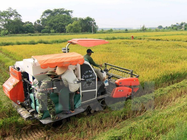 Farming sector urged to restructure as competition grows hinh anh 1