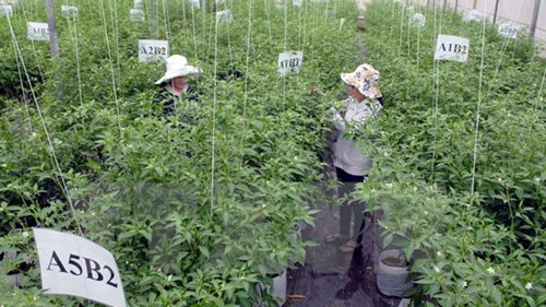 Vietnam-Japan agricultural cooperation to thrive hinh anh 1