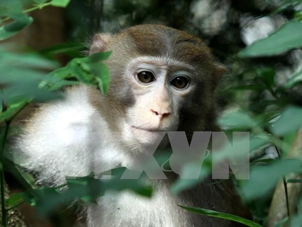 GEF helps Vietnam increase biodiversity preservation hinh anh 1