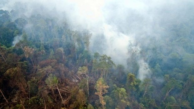Indonesia accepts international help to address haze hinh anh 1