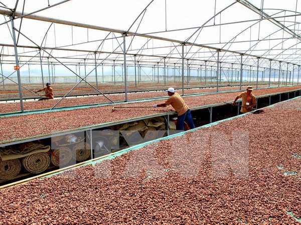 Dong Nai chocolate to enter regional markets hinh anh 1