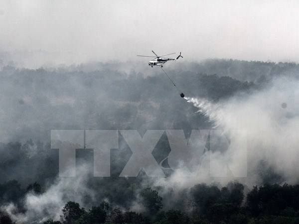 Malaysia, Indonesia hold dialogue on forest fires, haze pollution hinh anh 1
