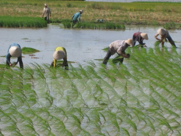 Japanese firm to pilot hi-tech rice farming in Ha Nam hinh anh 1