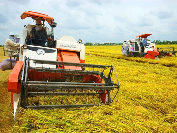 More incentives needed for expanding large-scale fields hinh anh 1
