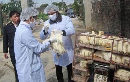 Ministry urges precautionary measures to control bird flu hinh anh 1