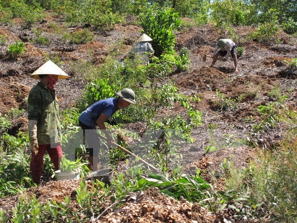 Thua Thien- Hue invests 1.3 million USD in afforestation hinh anh 1