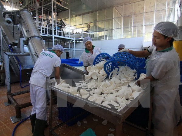 Largest coconut processing factory inaugurated in Ben Tre hinh anh 1