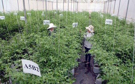 RoK enterprise invests in high-tech agricultural project hinh anh 1