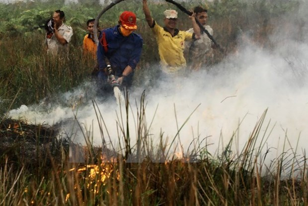 Indonesia works to restore environment after fires hinh anh 1