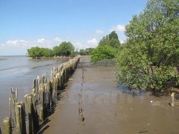 Mangrove forests protect Mekong crops hinh anh 1