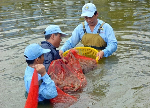 Mekong Delta makes livelihood adapt to climate change hinh anh 1