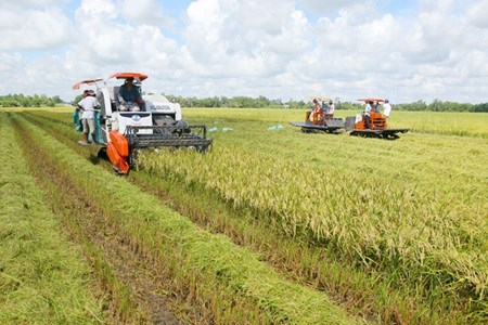 Mekong Delta agriculture needs high technology hinh anh 1