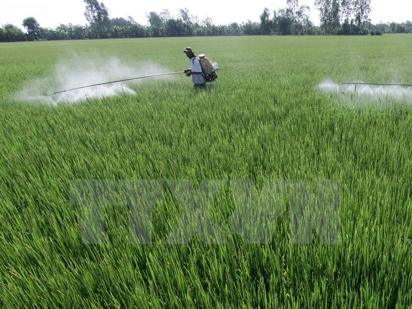 Tra Vinh: Rice farmers earn extra income with intensive farming hinh anh 1