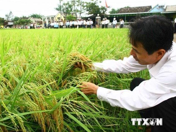 FPT, Fujitsu launch 'smart' agriculture hinh anh 1