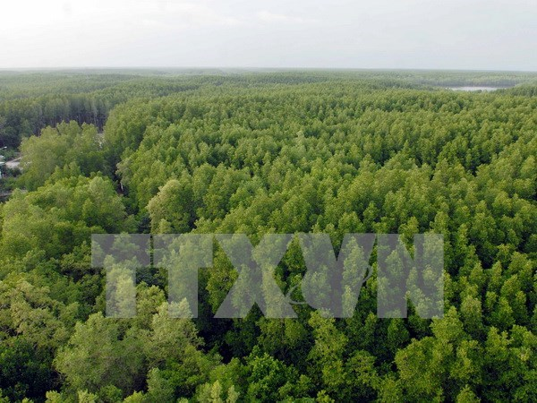 Millions in coastal areas benefit from mangrove forest hinh anh 1