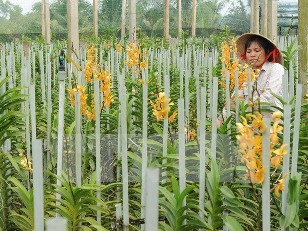 New orchid species found in Central Highlands hinh anh 1