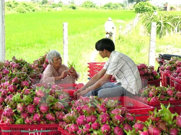 Tien Giang has three more GlobalGAP agricultural establishments hinh anh 1