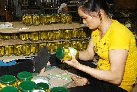 Record year for starting business in Vietnam hinh anh 1