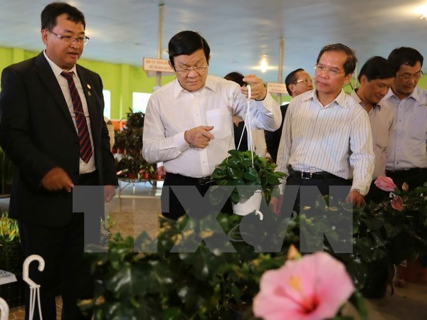 President visits hi-tech agricultural farms in Lam Dong hinh anh 1